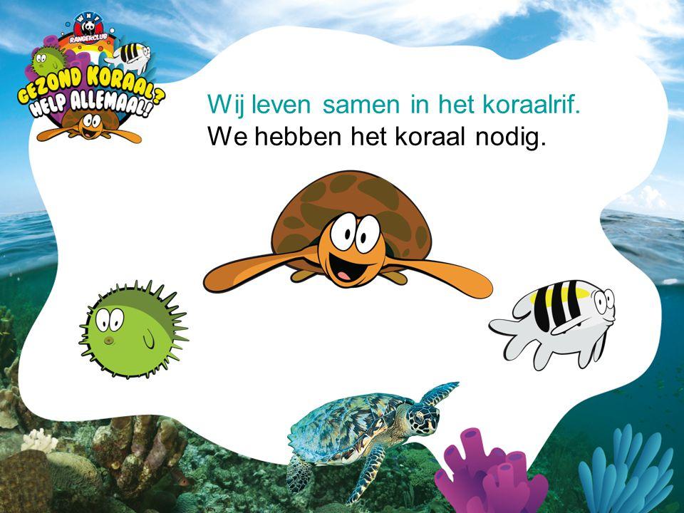Wij leven samen in het koraalrif. We hebben het koraal nodig.