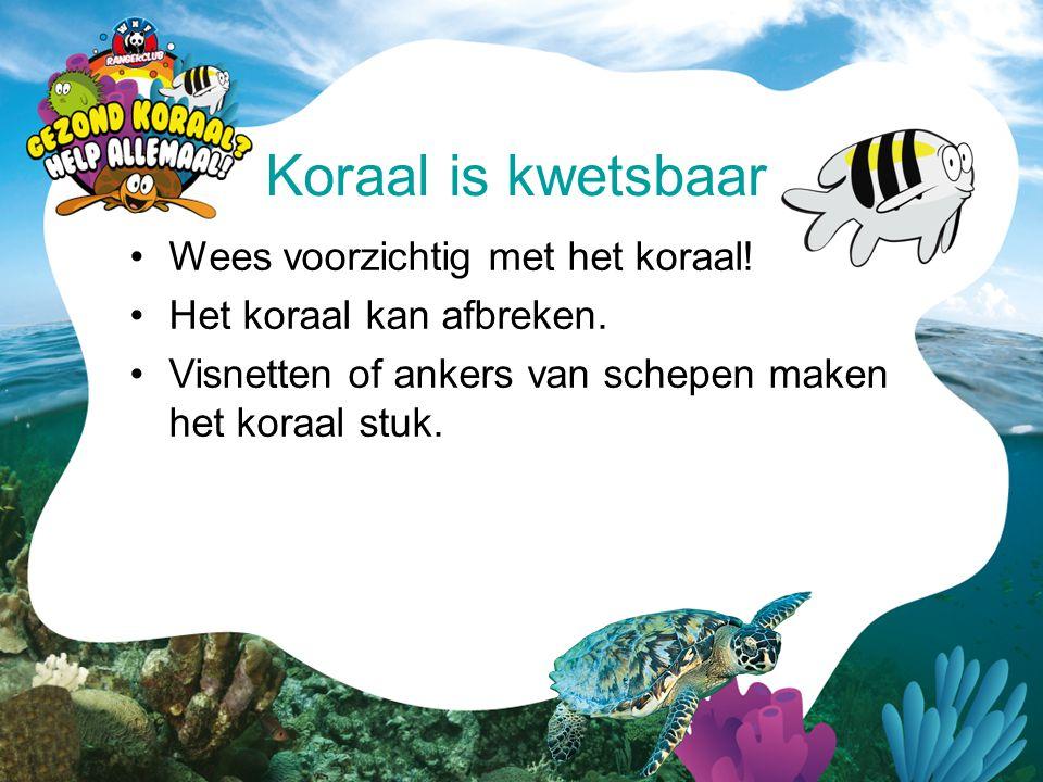 •Wees voorzichtig met het koraal! •Het koraal kan afbreken. •Visnetten of ankers van schepen maken het koraal stuk. Koraal is kwetsbaar