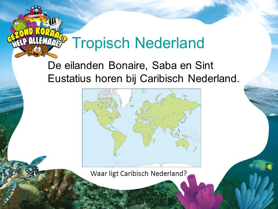 Tropisch Nederland De eilanden Bonaire, Saba en Sint Eustatius horen bij Caribisch Nederland. Waar ligt Caribisch Nederland?