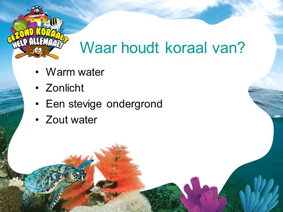 •Warm water •Zonlicht •Een stevige ondergrond •Zout water Waar houdt koraal van?