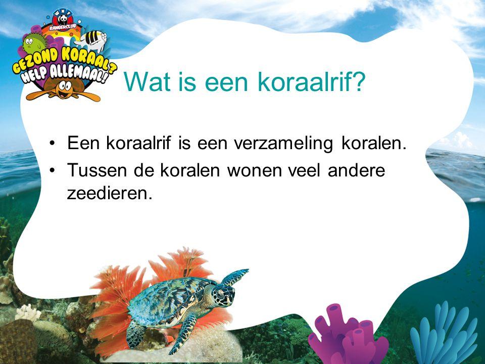 •Een koraalrif is een verzameling koralen. •Tussen de koralen wonen veel andere zeedieren. Wat is een koraalrif?