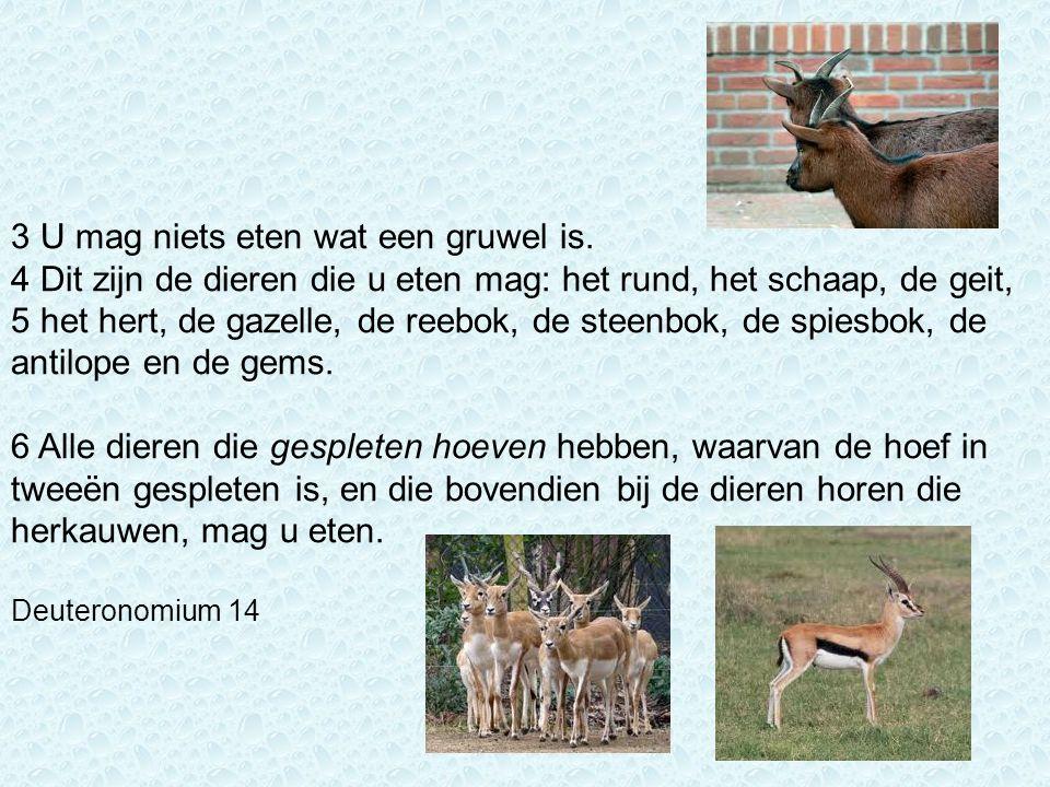 3 U mag niets eten wat een gruwel is. 4 Dit zijn de dieren die u eten mag: het rund, het schaap, de geit, 5 het hert, de gazelle, de reebok, de steenb