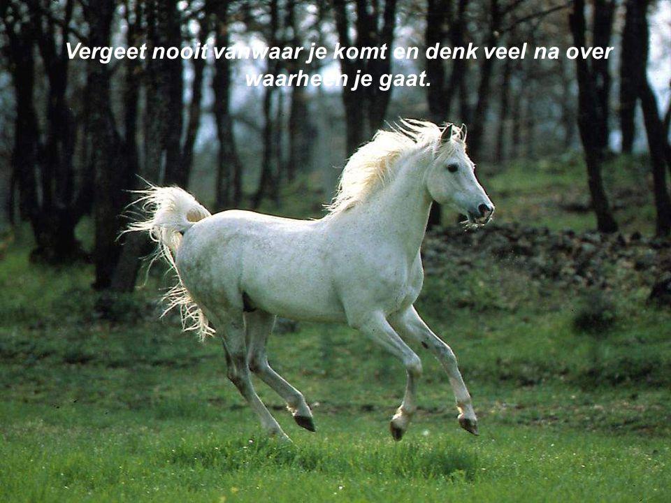Niet dromen is leven zonder hoop.