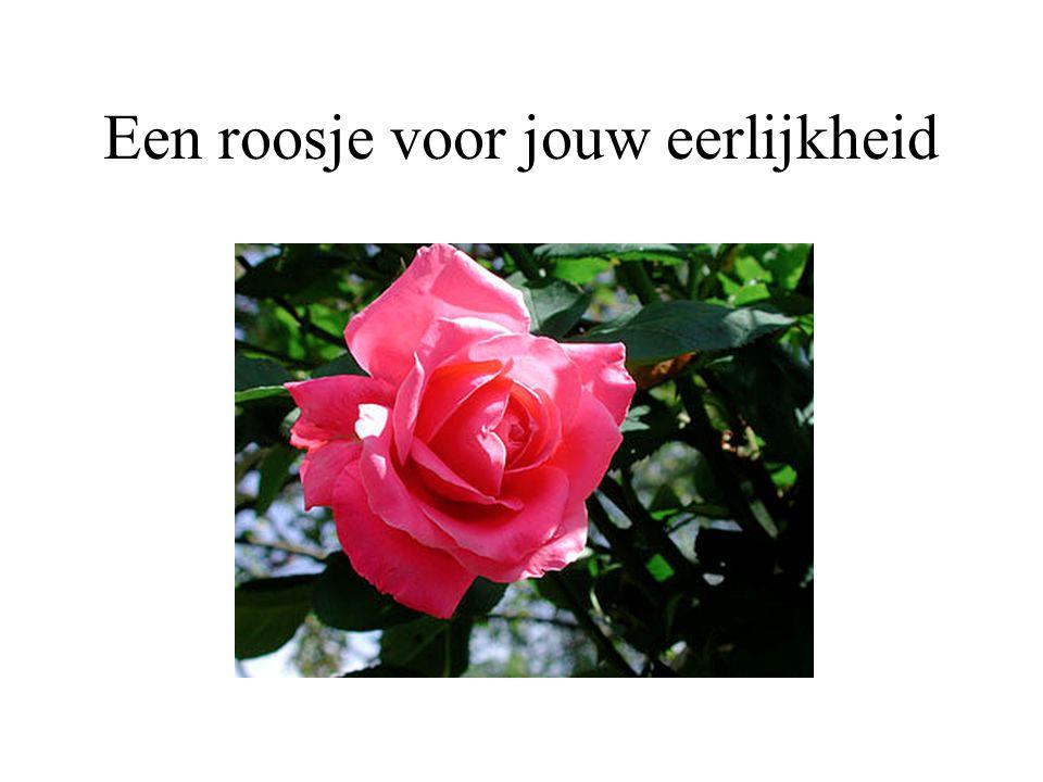 Een roosje voor jouw oprechtheid..