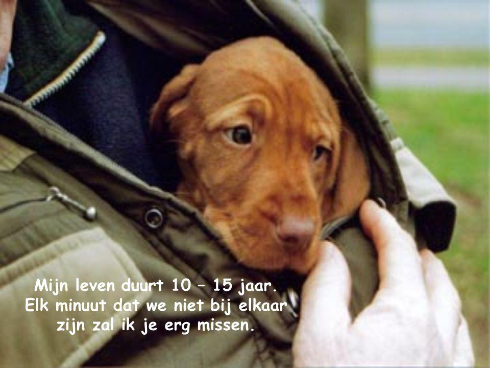 De 10 geboden voor iedereen die van zijn hond houdt…