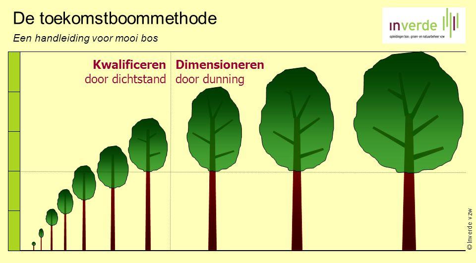 © Inverde vzw Kwalificeren door dichtstand Dimensioneren door dunning De toekomstboommethode Een handleiding voor mooi bos
