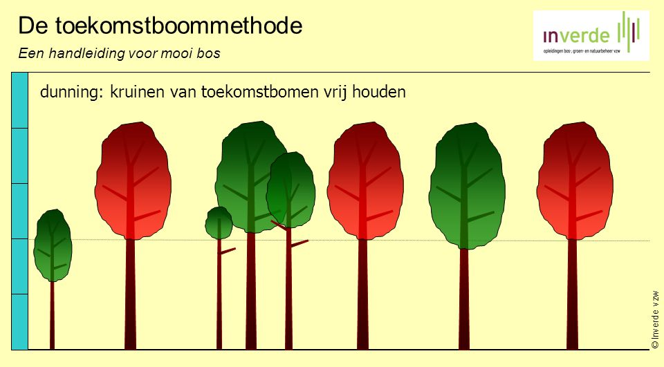 © Inverde vzw De toekomstboommethode Een handleiding voor mooi bos dunning: kruinen van toekomstbomen vrij houden