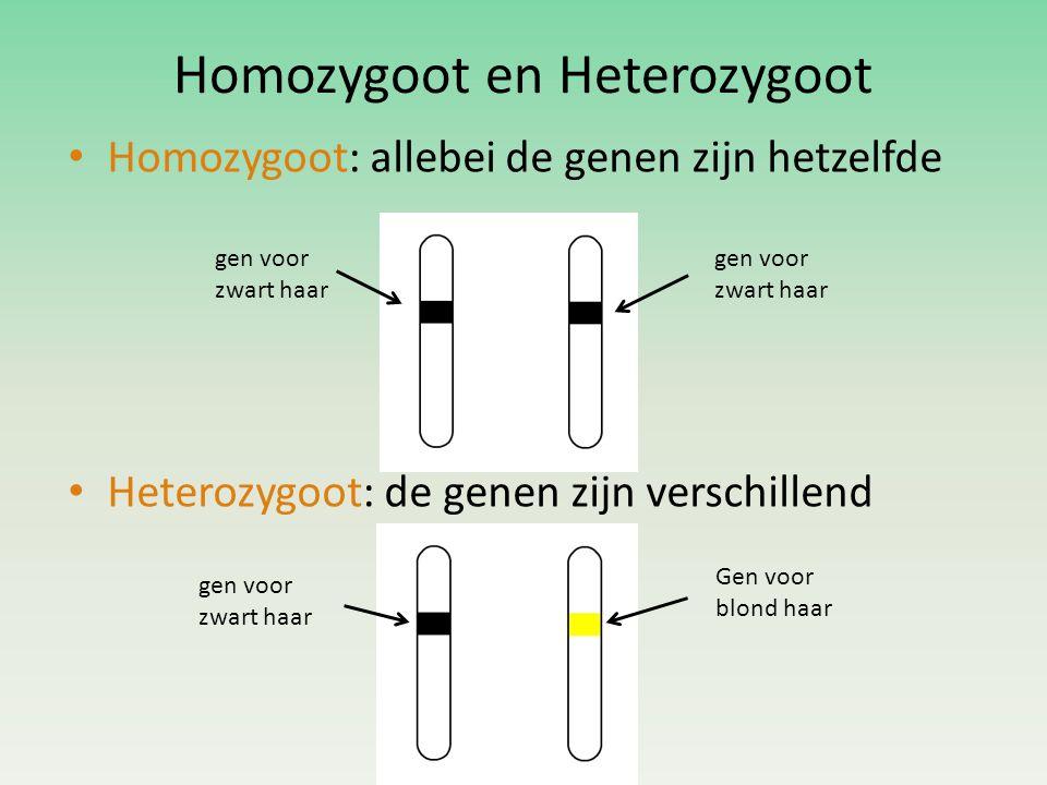 Homozygoot en Heterozygoot • Homozygoot: allebei de genen zijn hetzelfde • Heterozygoot: de genen zijn verschillend gen voor zwart haar Gen voor blond