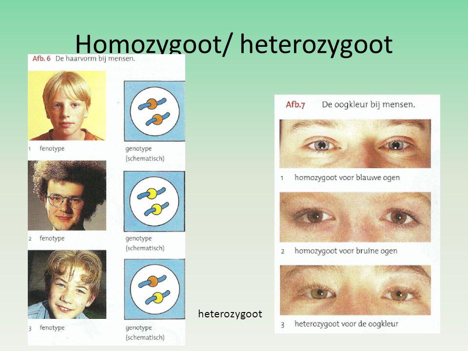 Homozygoot/ heterozygoot heterozygoot
