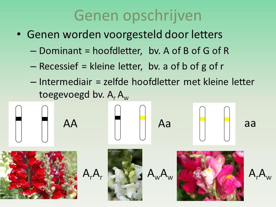 Genen opschrijven • Genen worden voorgesteld door letters – Dominant = hoofdletter, bv. A of B of G of R – Recessief = kleine letter, bv. a of b of g