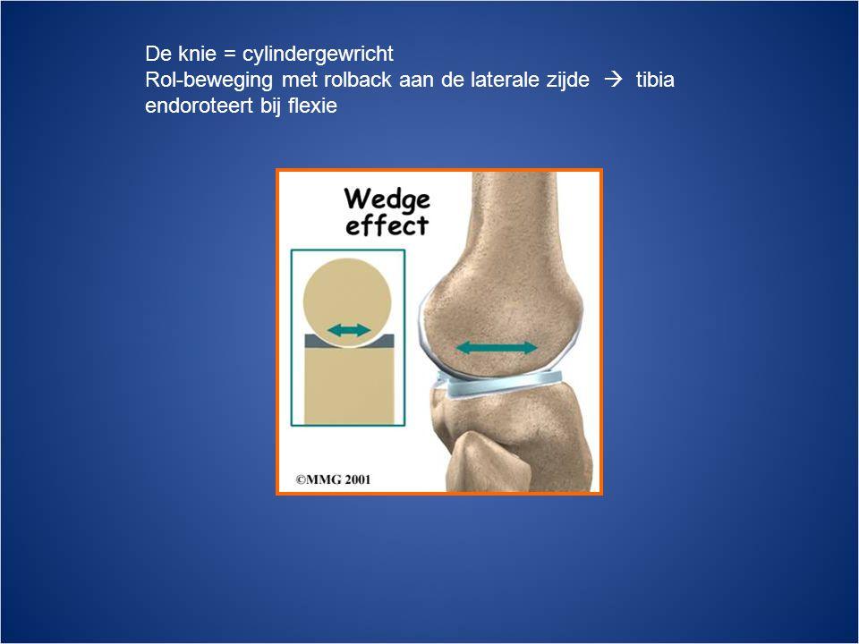 De knie = cylindergewricht Rol-beweging met rolback aan de laterale zijde  tibia endoroteert bij flexie