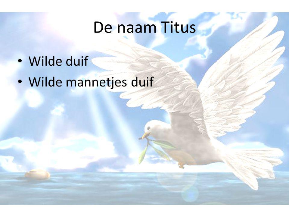 De naam Titus • Wilde duif • Wilde mannetjes duif
