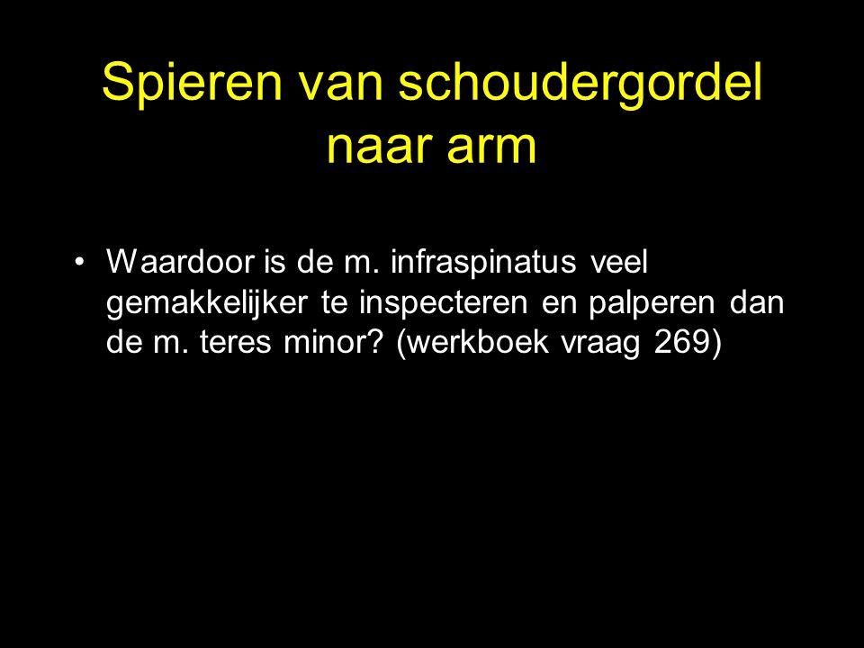Spieren van schoudergordel naar arm •Waardoor is de m. infraspinatus veel gemakkelijker te inspecteren en palperen dan de m. teres minor? (werkboek vr