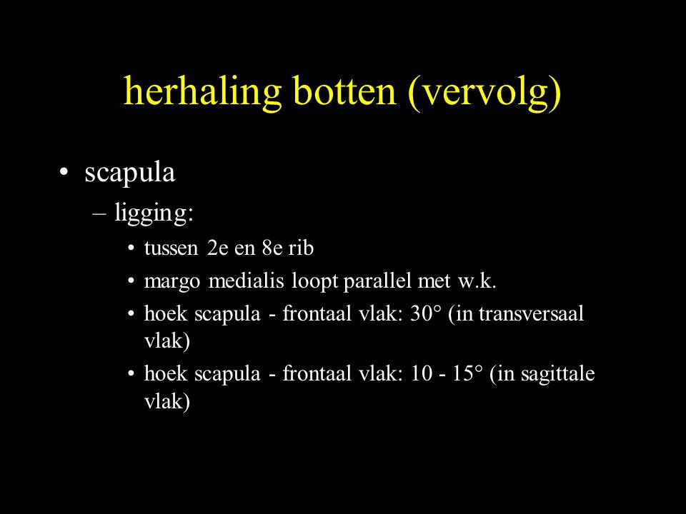 herhaling botten (vervolg) •scapula –ligging: •tussen 2e en 8e rib •margo medialis loopt parallel met w.k.
