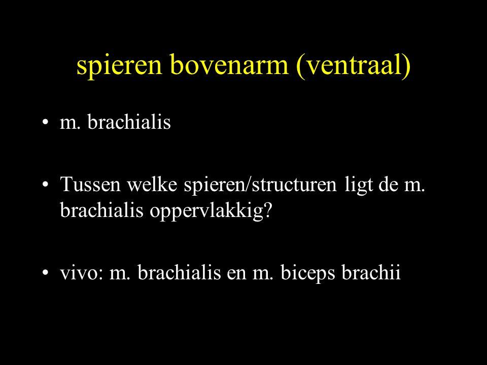 spieren bovenarm (ventraal) •m.brachialis •Tussen welke spieren/structuren ligt de m.