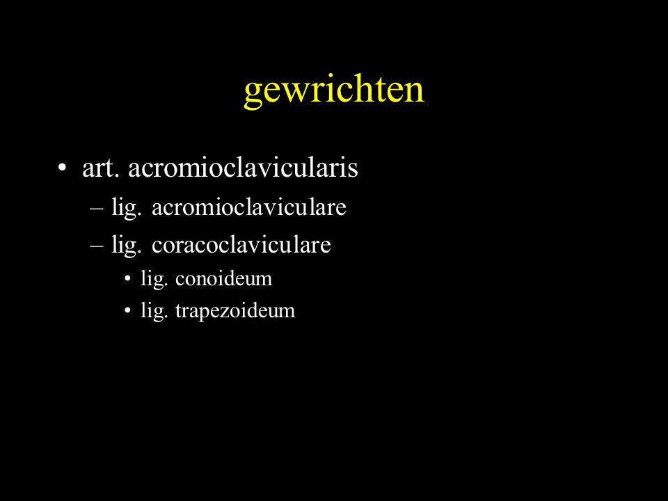 gewrichten •art.acromioclavicularis –lig. acromioclaviculare –lig.