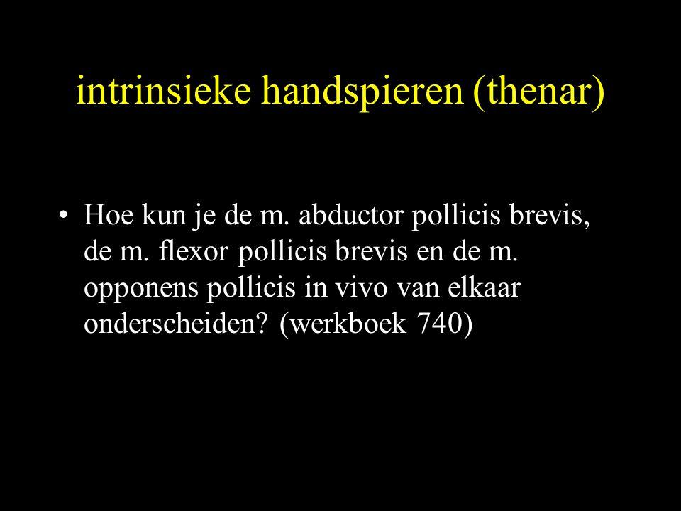 intrinsieke handspieren (thenar) •Hoe kun je de m.