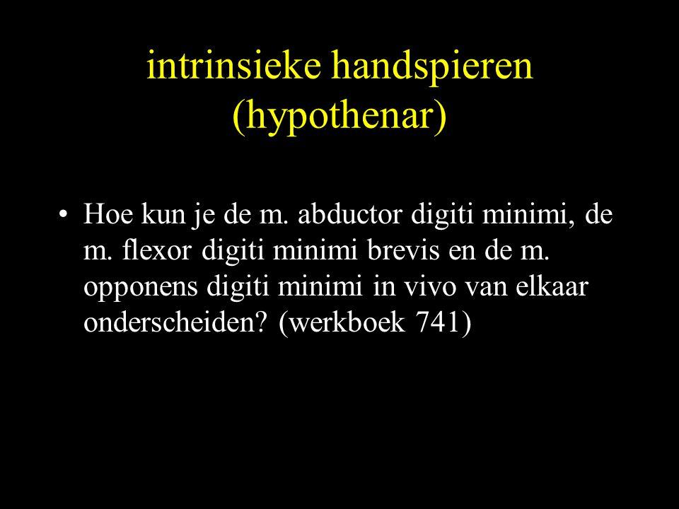 intrinsieke handspieren (hypothenar) •Hoe kun je de m. abductor digiti minimi, de m. flexor digiti minimi brevis en de m. opponens digiti minimi in vi