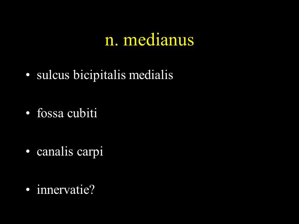 n. medianus •sulcus bicipitalis medialis •fossa cubiti •canalis carpi •innervatie?