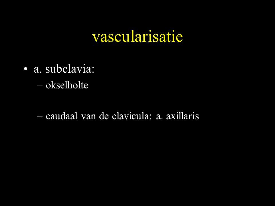 vascularisatie •a. subclavia: –okselholte –caudaal van de clavicula: a. axillaris