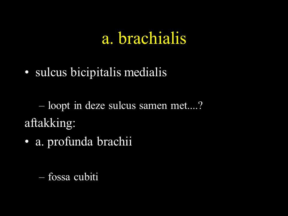 a.brachialis •sulcus bicipitalis medialis –loopt in deze sulcus samen met.....