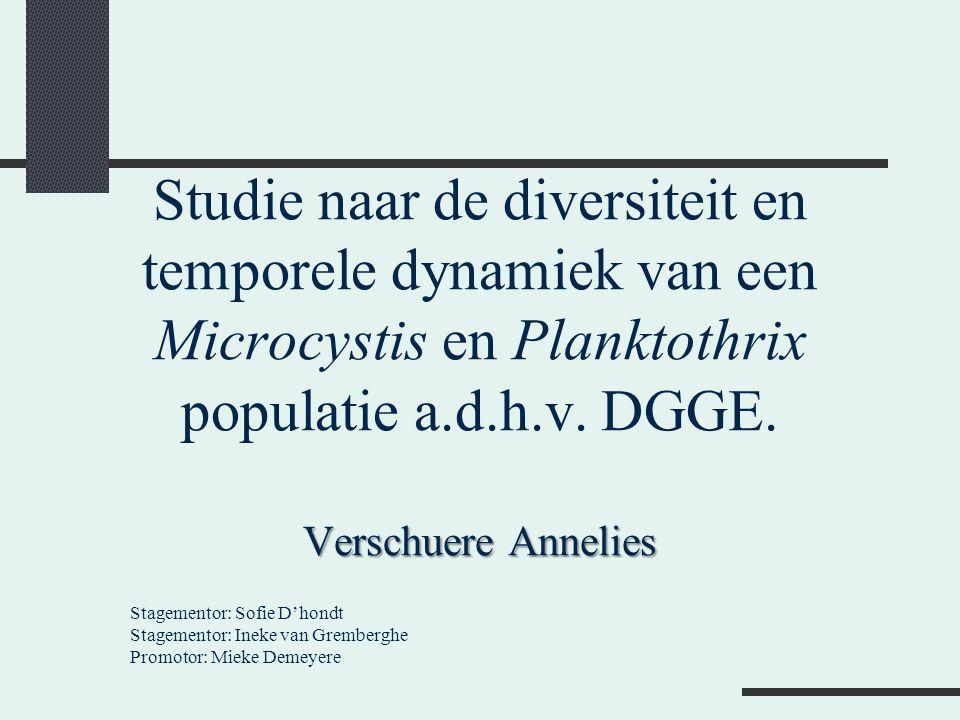 Verschuere Annelies Studie naar de diversiteit en temporele dynamiek van een Microcystis en Planktothrix populatie a.d.h.v. DGGE. Verschuere Annelies