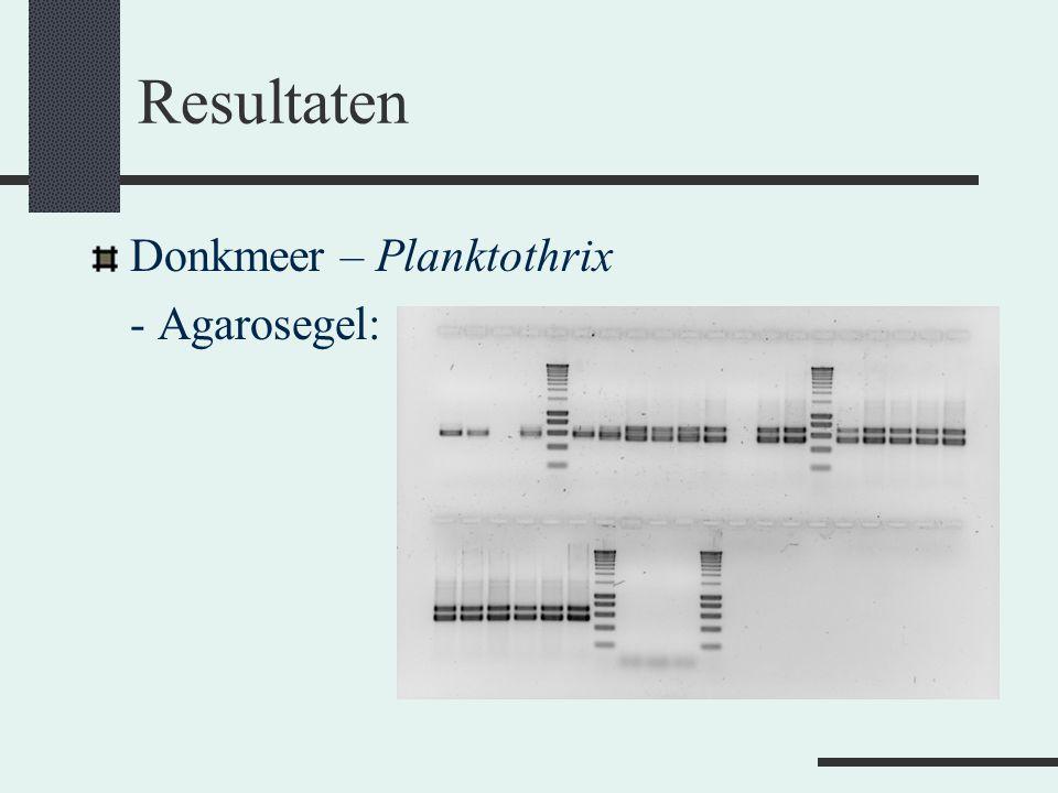 Resultaten Donkmeer – Planktothrix - Agarosegel: