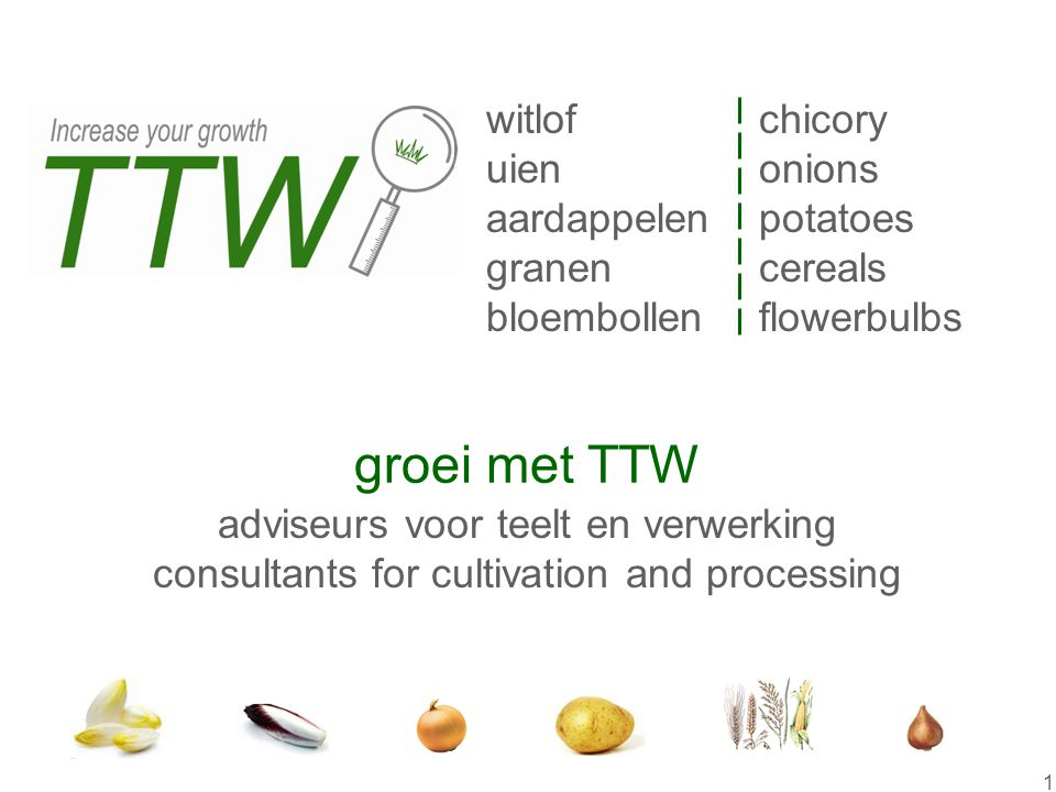 1 StartStart witlof uien aardappelen granen bloembollen chicory onions potatoes cereals flowerbulbs adviseurs voor teelt en verwerking consultants for cultivation and processing groei met TTW