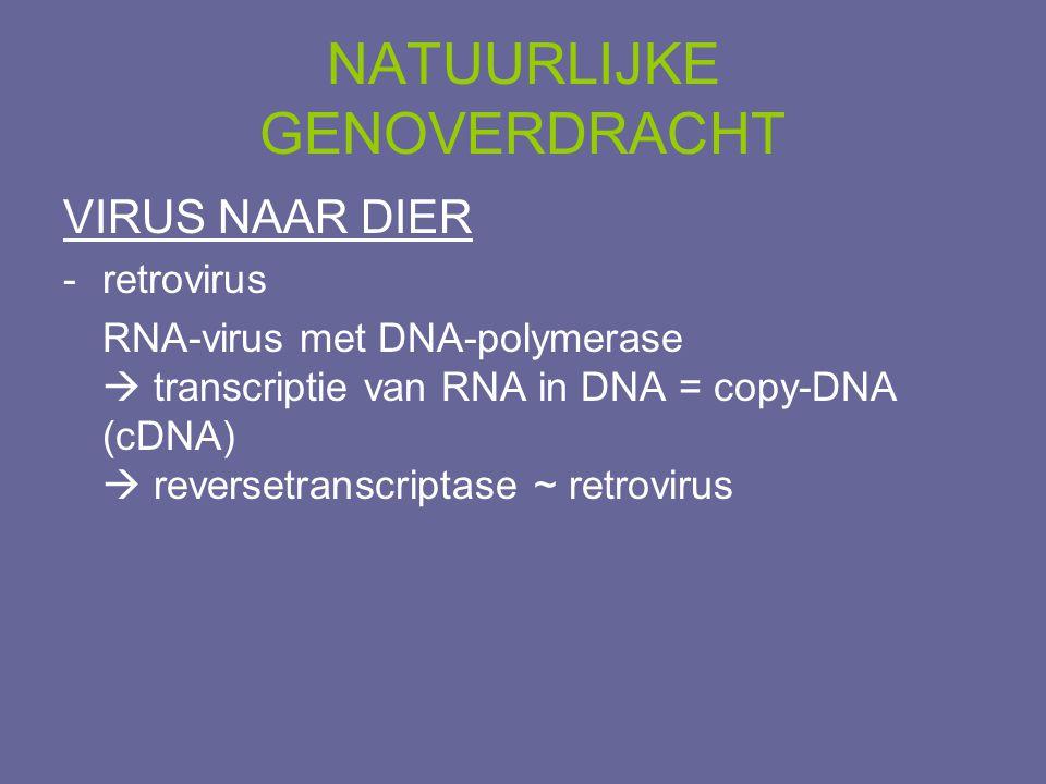 NATUURLIJKE GENOVERDRACHT VIRUS NAAR DIER -retrovirus RNA-virus met DNA-polymerase  transcriptie van RNA in DNA = copy-DNA (cDNA)  reversetranscript