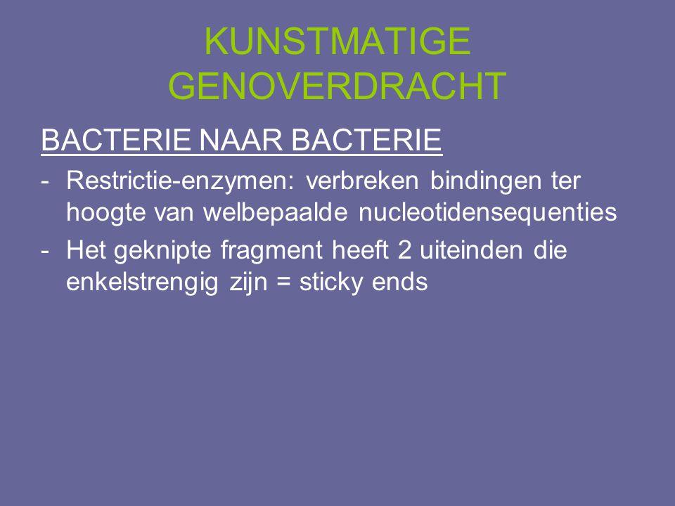 KUNSTMATIGE GENOVERDRACHT BACTERIE NAAR BACTERIE -Restrictie-enzymen: verbreken bindingen ter hoogte van welbepaalde nucleotidensequenties -Het geknip