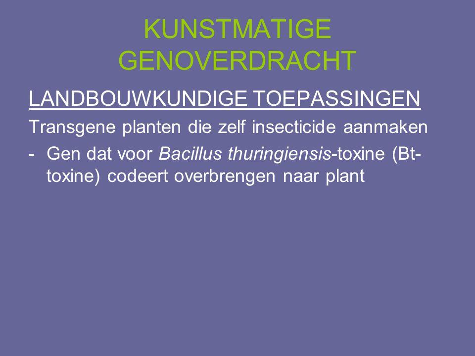 KUNSTMATIGE GENOVERDRACHT LANDBOUWKUNDIGE TOEPASSINGEN Transgene planten die zelf insecticide aanmaken -Gen dat voor Bacillus thuringiensis-toxine (Bt