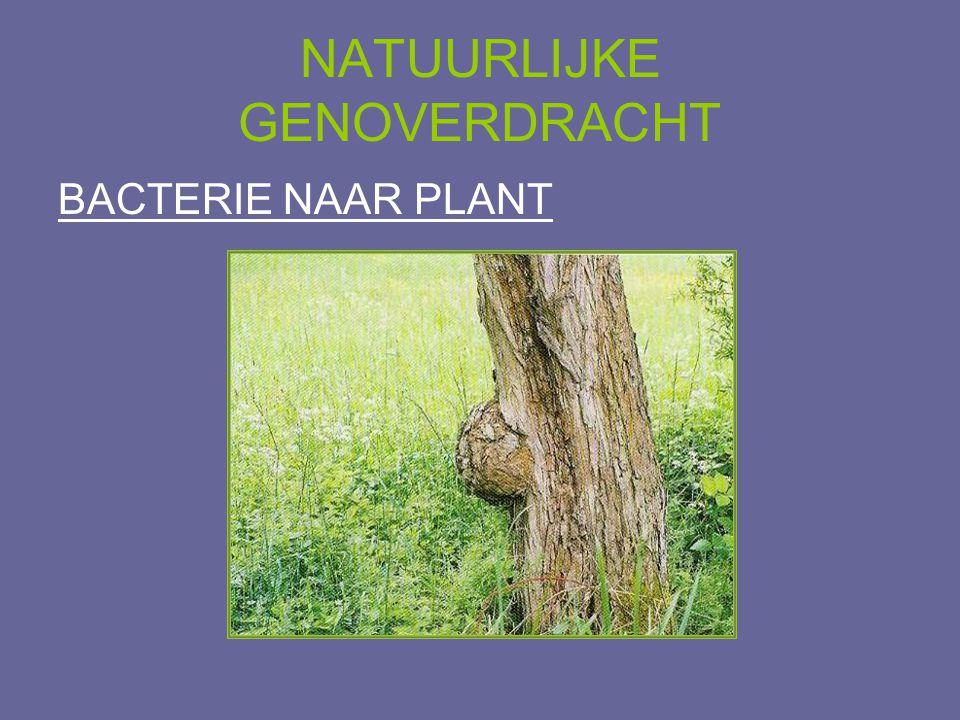 NATUURLIJKE GENOVERDRACHT BACTERIE NAAR PLANT