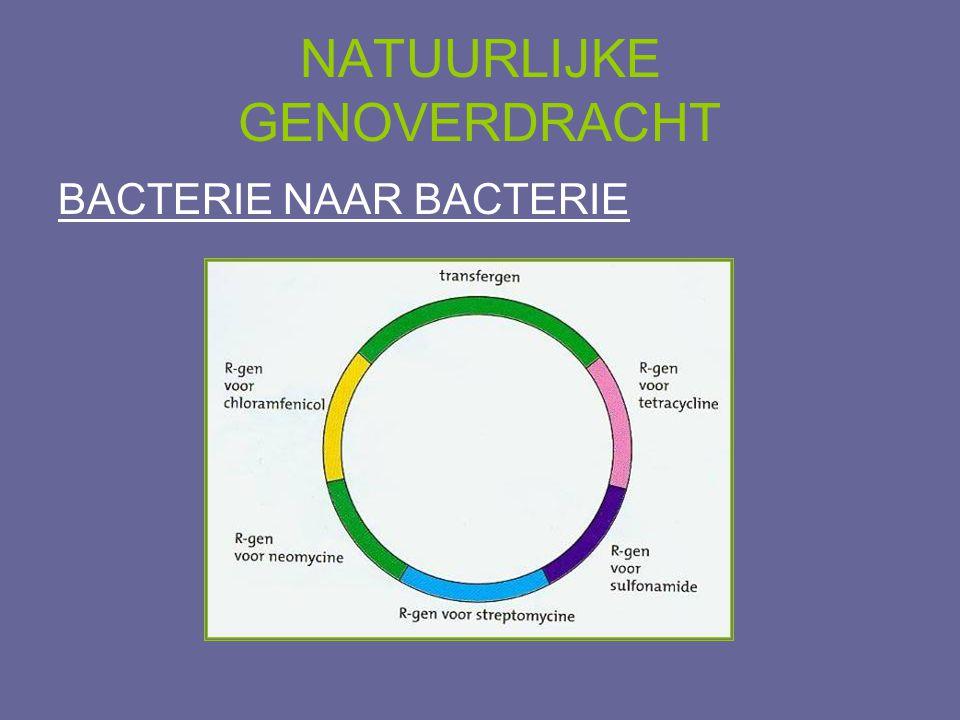 NATUURLIJKE GENOVERDRACHT BACTERIE NAAR BACTERIE conjugatie