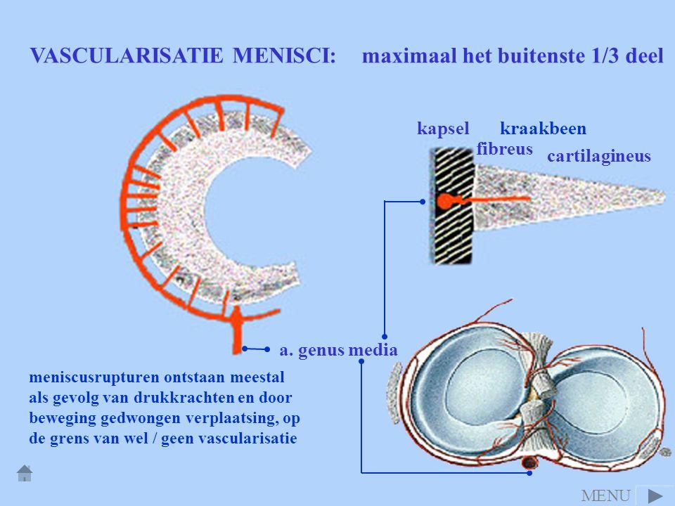 VASCULARISATIE MENISCI: maximaal het buitenste 1/3 deel cartilagineus fibreus kapsel a. genus media meniscusrupturen ontstaan meestal als gevolg van d