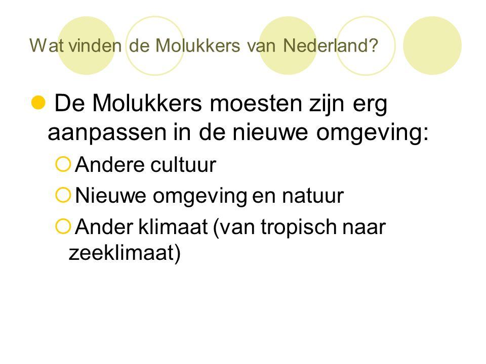 Wat vinden de Molukkers van Nederland?  De Molukkers moesten zijn erg aanpassen in de nieuwe omgeving:  Andere cultuur  Nieuwe omgeving en natuur 