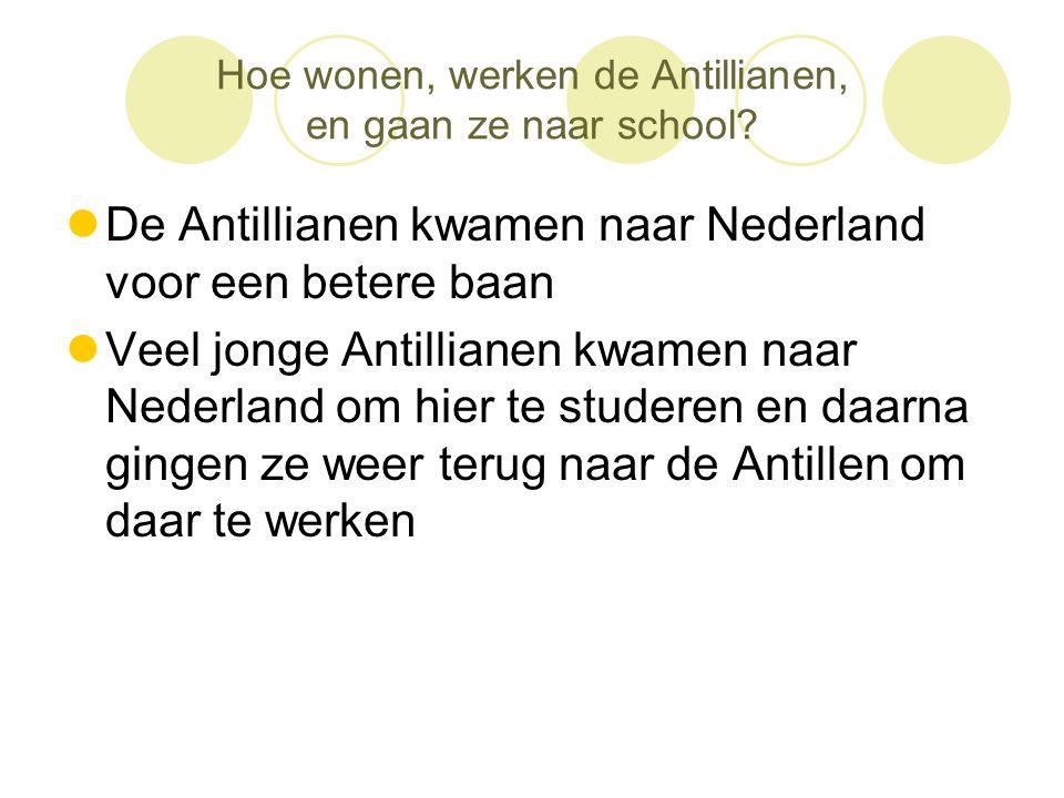 Hoe wonen, werken de Antillianen, en gaan ze naar school?  De Antillianen kwamen naar Nederland voor een betere baan  Veel jonge Antillianen kwamen