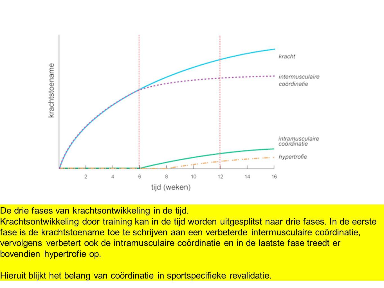 De drie fases van krachtsontwikkeling in de tijd. Krachtsontwikkeling door training kan in de tijd worden uitgesplitst naar drie fases. In de eerste f