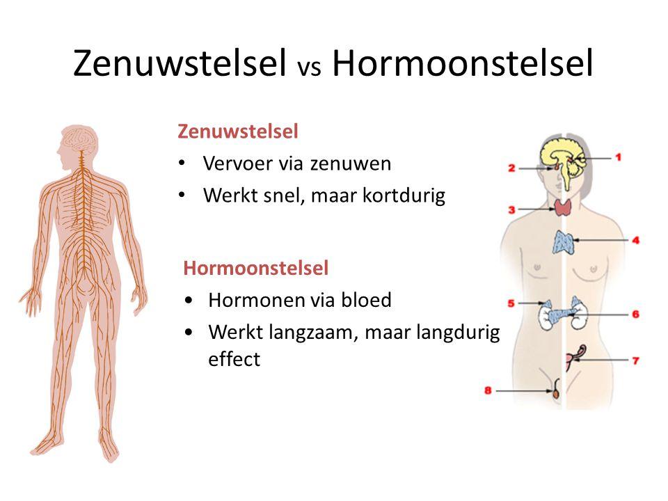 Zenuwstelsel vs Hormoonstelsel Zenuwstelsel • Vervoer via zenuwen • Werkt snel, maar kortdurig Hormoonstelsel •Hormonen via bloed •Werkt langzaam, maa