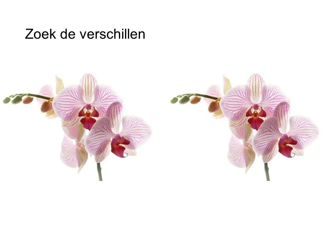 36 Retailconcepten Zorgeloze actie machine Profilerende bloemen en planten afdeling 2 Zorgeloos bloemen en planten schap