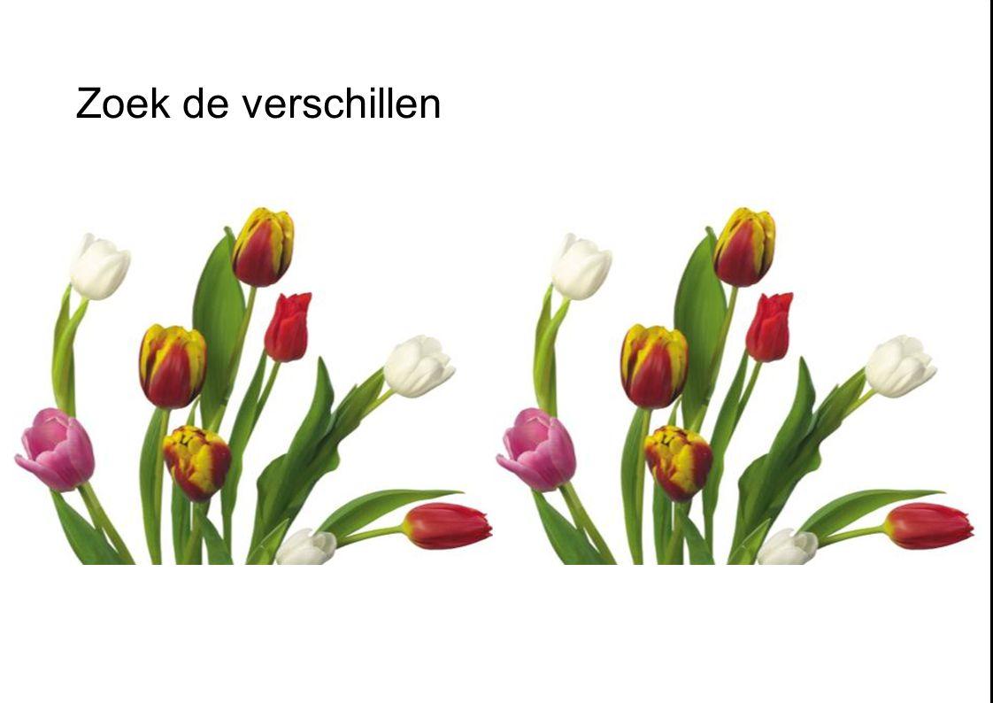 37 Retailconcepten Zorgeloze actie machine 3 Profilerende bloemen en planten afdeling Zorgeloos bloemen en plant schap