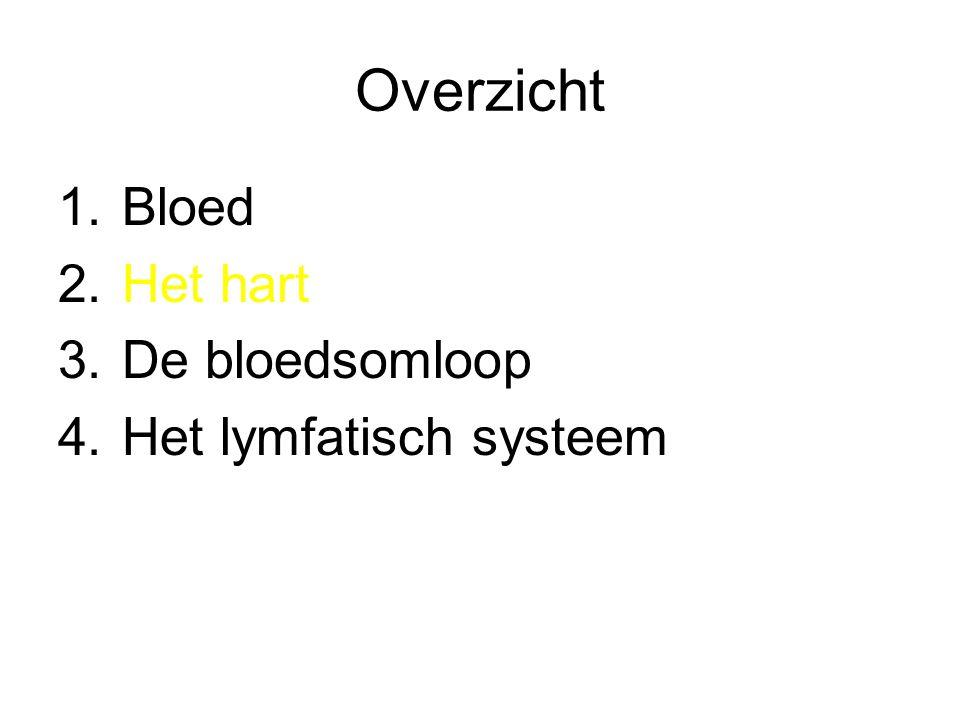 Bloedsomloop •Grote bloedsomloop –Linkerkamer –Aorta –Vertakkingen naar verschillende organen en weefsels –Vena cava (inferior en superior) –Rechteratrium