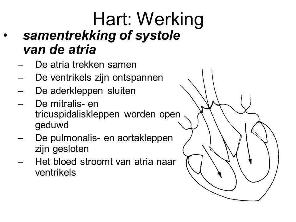 Hart: Werking •samentrekking of systole van de atria –De atria trekken samen –De ventrikels zijn ontspannen –De aderkleppen sluiten –De mitralis- en tricuspidaliskleppen worden open geduwd –De pulmonalis- en aortakleppen zijn gesloten –Het bloed stroomt van atria naar ventrikels