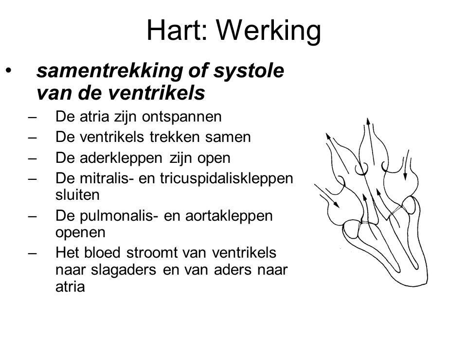 Hart: Werking •samentrekking of systole van de ventrikels –De atria zijn ontspannen –De ventrikels trekken samen –De aderkleppen zijn open –De mitralis- en tricuspidaliskleppen sluiten –De pulmonalis- en aortakleppen openen –Het bloed stroomt van ventrikels naar slagaders en van aders naar atria