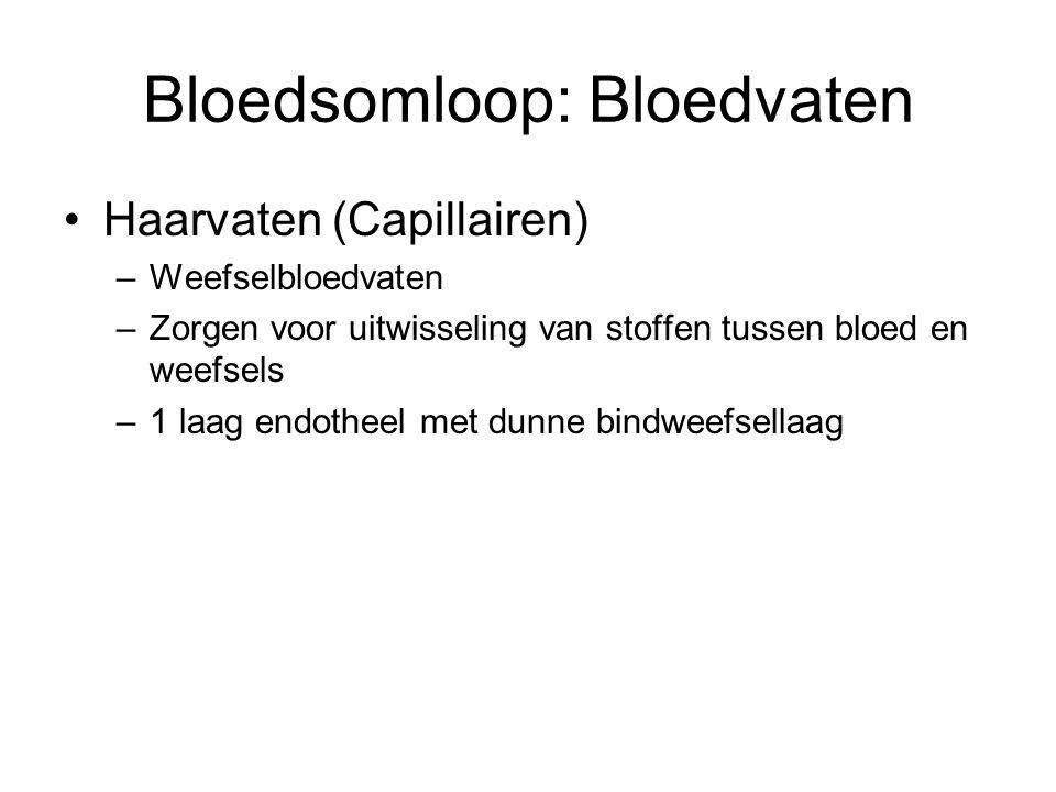 Bloedsomloop: Bloedvaten •Haarvaten (Capillairen) –Weefselbloedvaten –Zorgen voor uitwisseling van stoffen tussen bloed en weefsels –1 laag endotheel met dunne bindweefsellaag