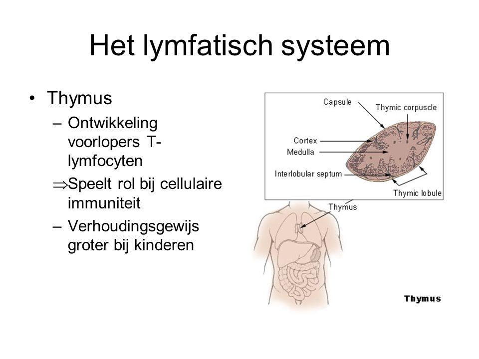Het lymfatisch systeem •Thymus –Ontwikkeling voorlopers T- lymfocyten  Speelt rol bij cellulaire immuniteit –Verhoudingsgewijs groter bij kinderen
