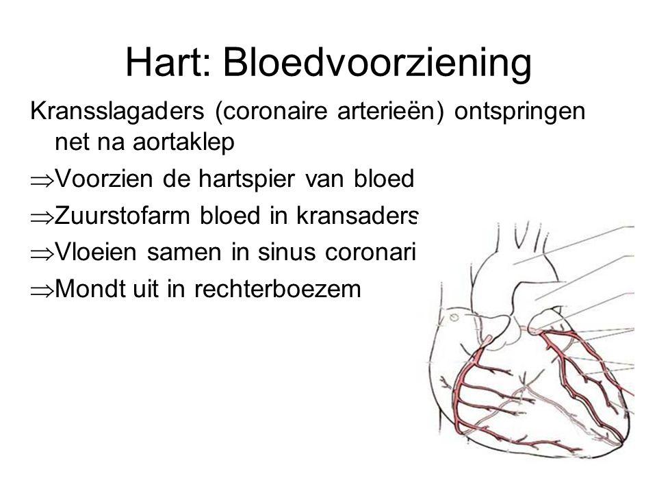 De bloedsomloop •Kleine bloedsomloop –Brengt bloed van het hart naar de longen en weer naar het hart •Grote bloedsomloop –Brengt bloed van hart naar organen en terug naar hart