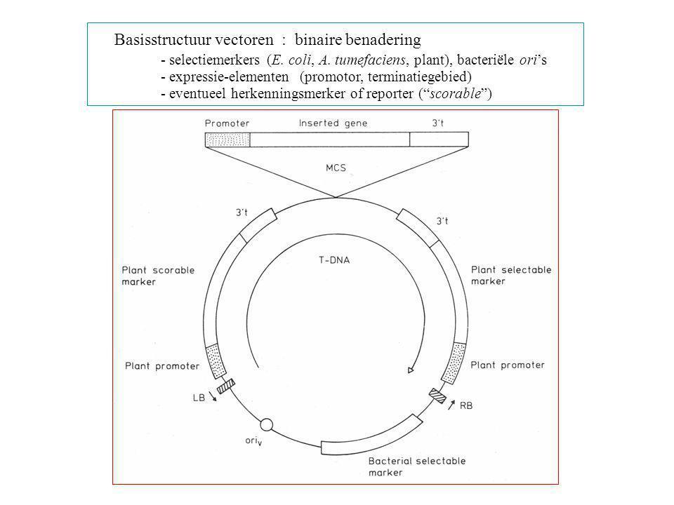 Basisstructuur vectoren : binaire benadering - selectiemerkers (E. coli, A. tumefaciens, plant), bacteriële ori's - expressie-elementen (promotor, ter