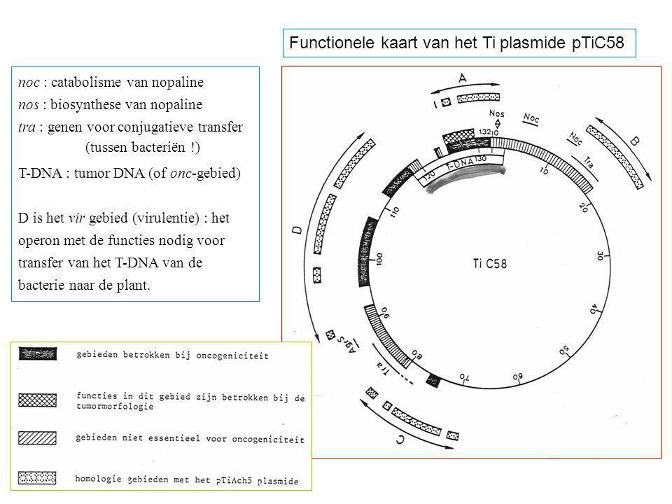 Functionele kaart van het Ti plasmide pTiC58 noc : catabolisme van nopaline nos : biosynthese van nopaline tra : genen voor conjugatieve transfer (tus