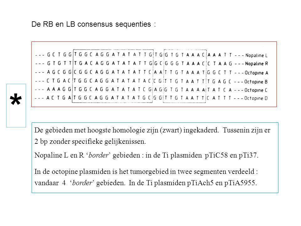 De RB en LB consensus sequenties : De gebieden met hoogste homologie zijn (zwart) ingekaderd. Tussenin zijn er 2 bp zonder specifieke gelijkenissen. N