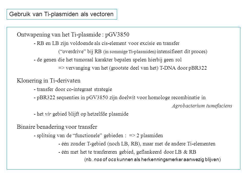 Structuur van het Ti plasmide, dat ontwapend is, m.a.w.